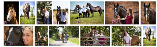 We're still open for business-Covid 19 Update Horse/Equine Photoshoots
